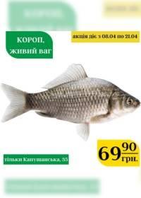 vopak 0704 0